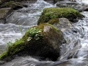 River detial