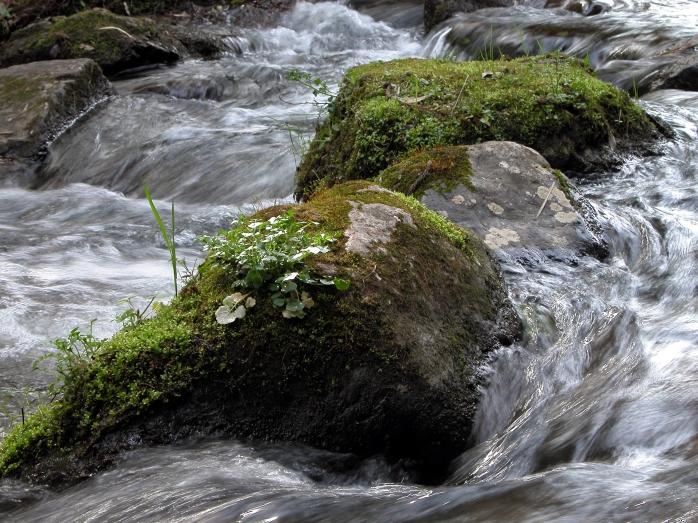 Flowing through life